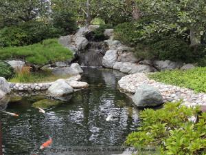 SD Jap Gdn Koi Pond
